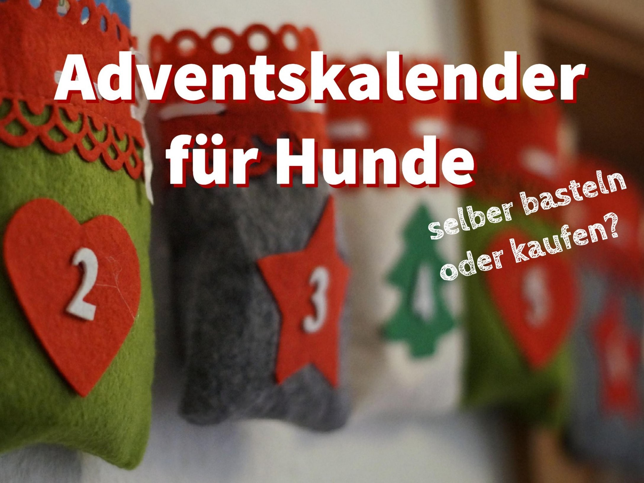 Adventskalender Für Hunde Selber Basteln Oder Kaufen von Hunde Adventskalender Selber Machen Photo