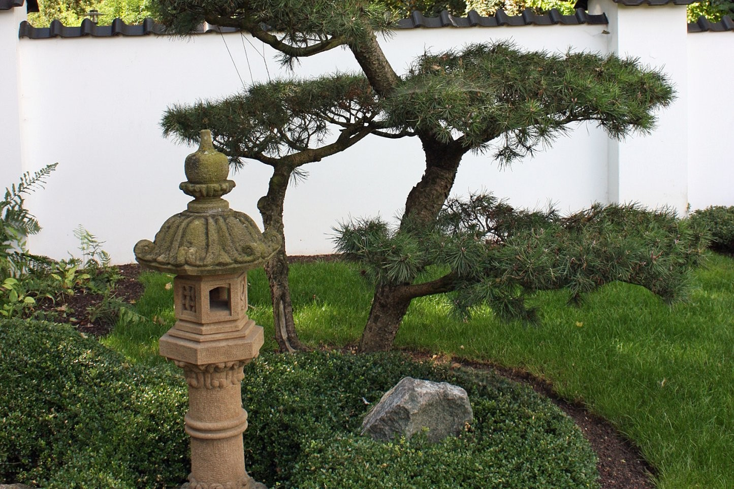 Aisa Und Japan Garten  Native Plants von Bepflanzung Japanischer Garten Bild