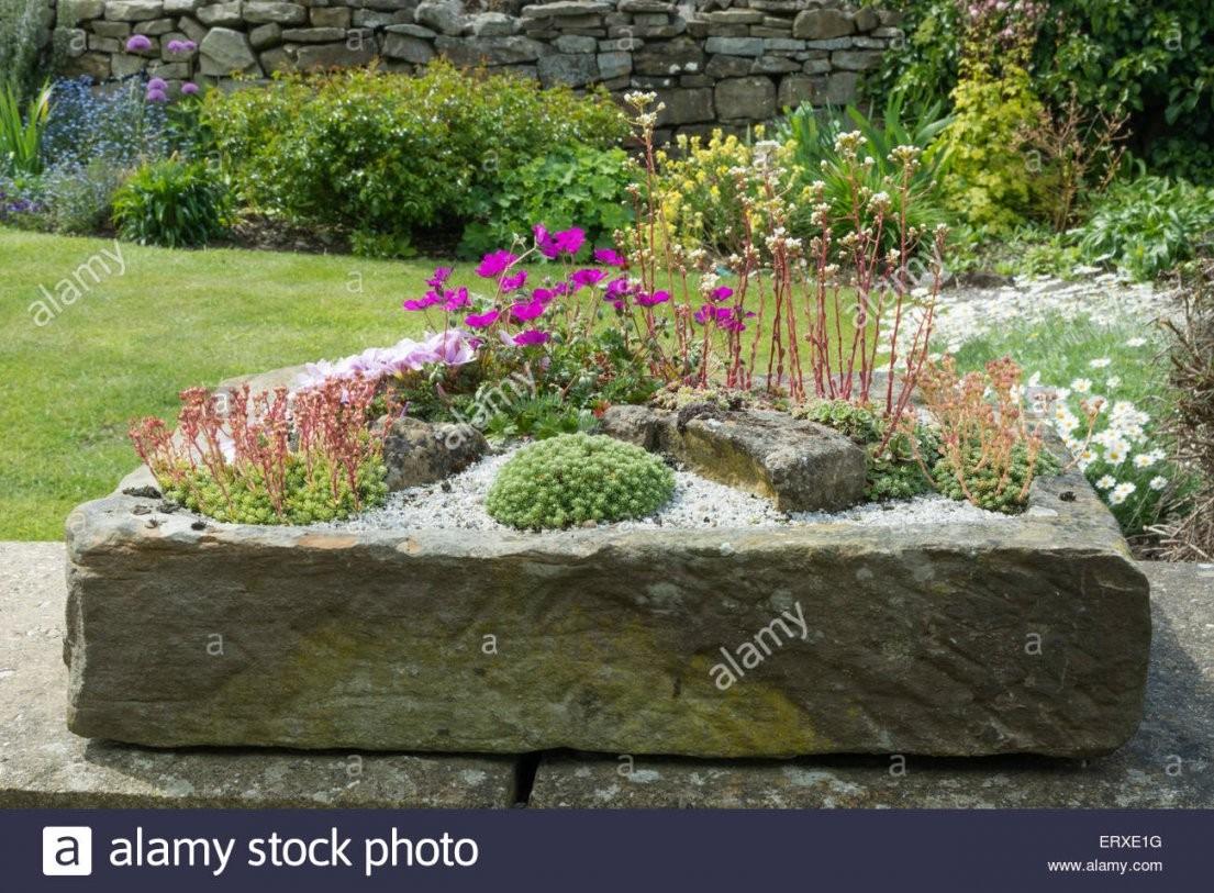 Alpines Gepflanzt In Einem Stein Garten Waschbecken Stockfoto Bild von Garten Waschbecken Stein Bild