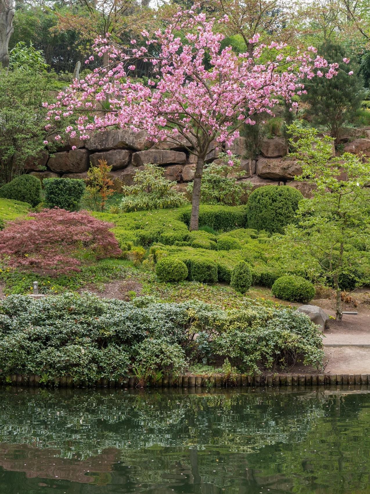 Dateibepflanzung Oberer Teich Japanischer Garten Kaiserslautern von Bepflanzung Japanischer Garten Photo