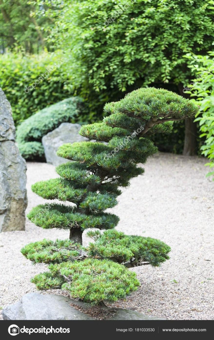 Dekorationen Luxus Pflanzen Für Japanischen Garten Japanischer von Pflanzen Für Japanischen Garten Photo