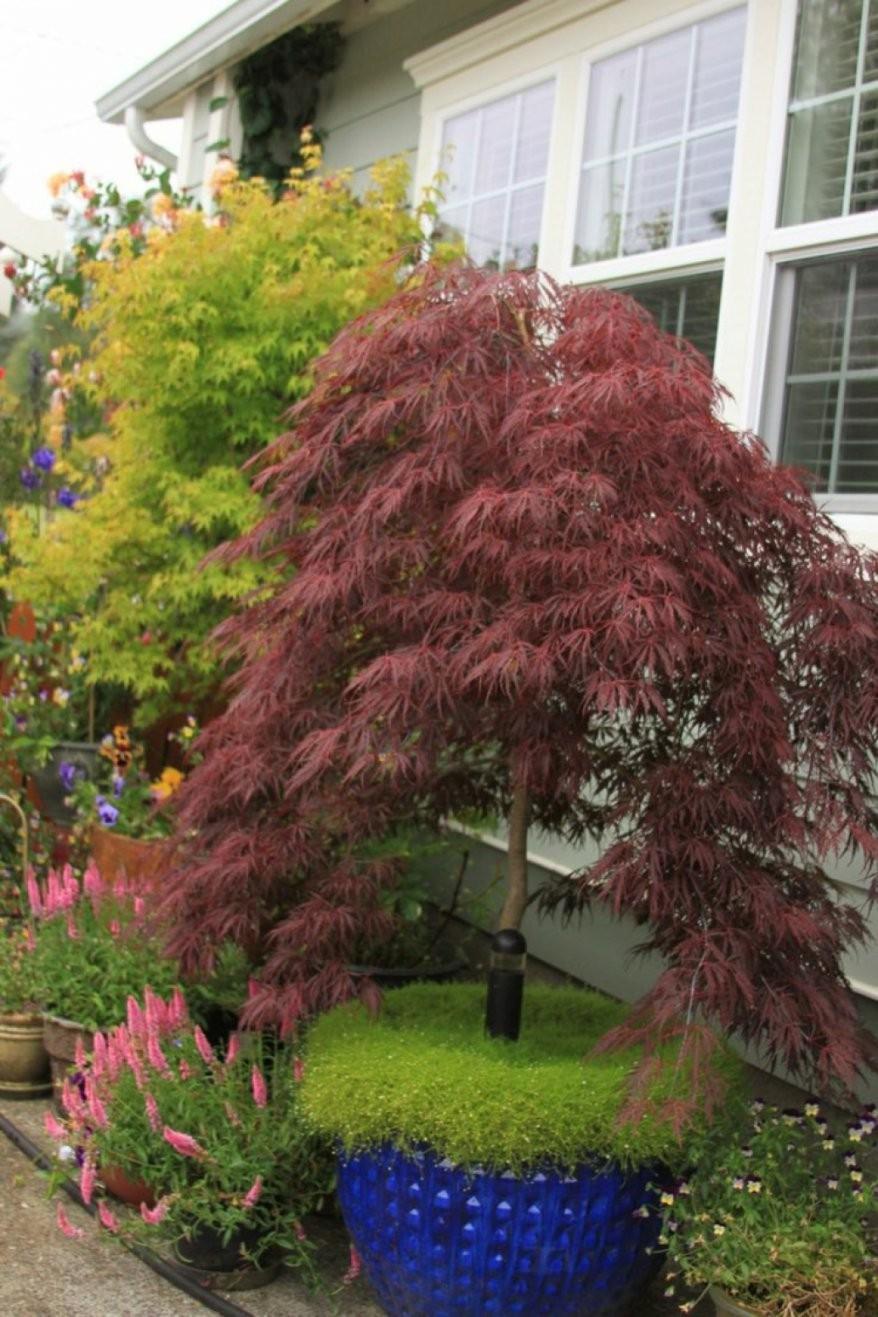 Dekorationen Schöne Pflanzen Für Japanischen Garten Japanischer von Pflanzen Im Japanischen Garten Bild