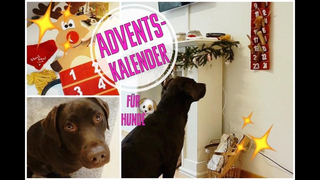 ♡ Milka Mittwoch ♡ Diy Adventskalender Für Hunde  Youtube von Hunde Adventskalender Selber Machen Bild