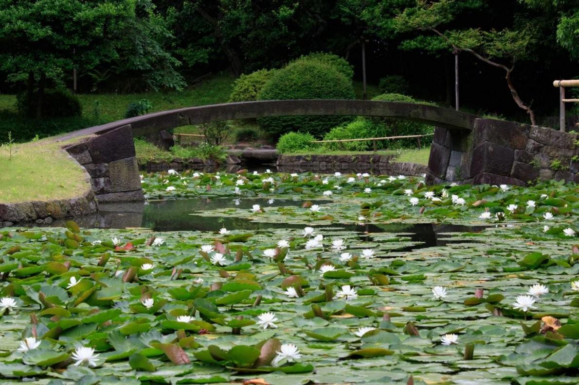 Ein Japanischer Garten Als Meditation  Sylvia Knittel  Fotografie von Kleiner Japanischer Garten Bild