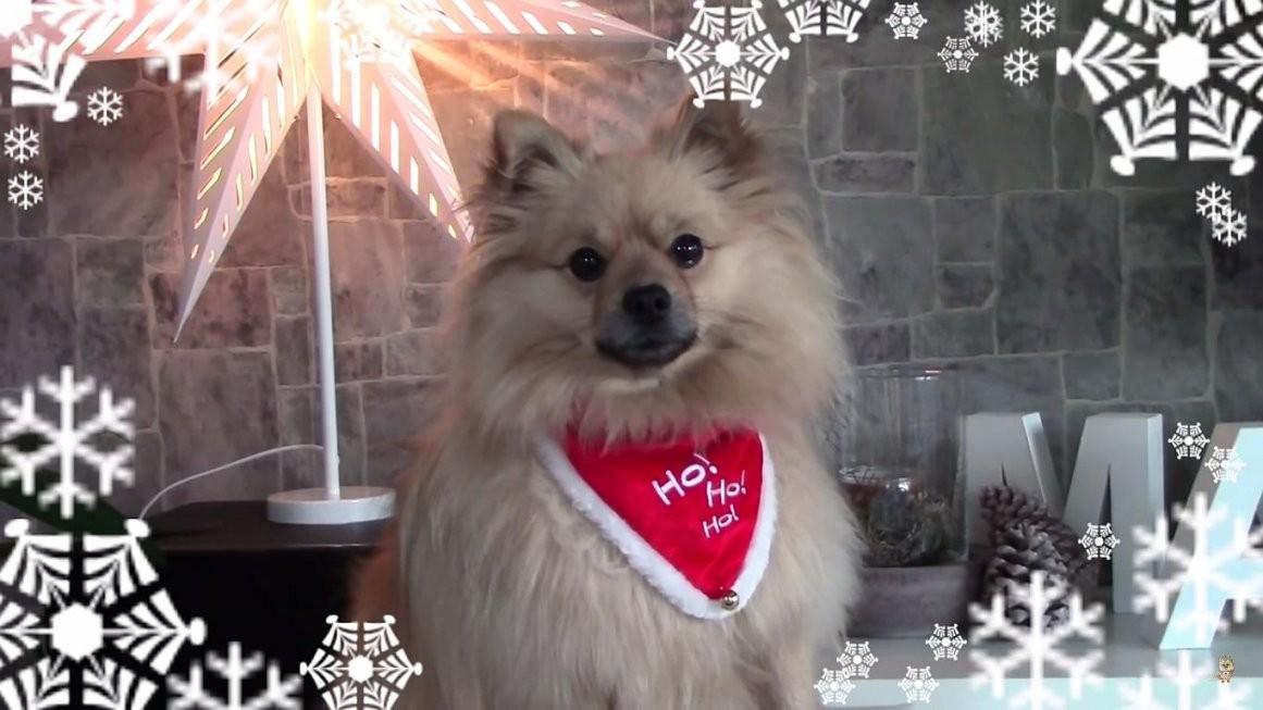 Hunde Adventskalender Selber Basteln  Top Adventskalender Ideen von Hunde Adventskalender Selber Machen Bild