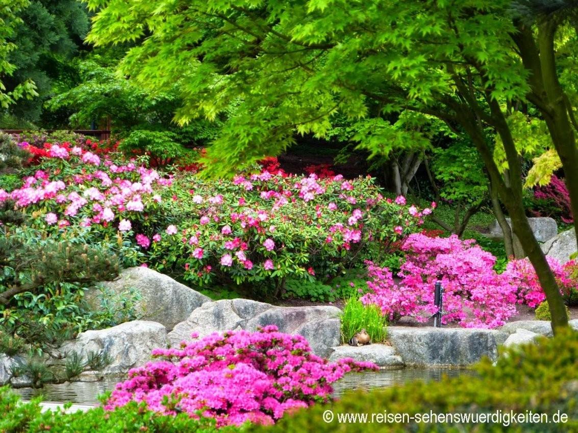 Japanischer Garten Bilder Pixabay Kostenlose Bilder von Japanischer Garten Bilder Kostenlos Photo