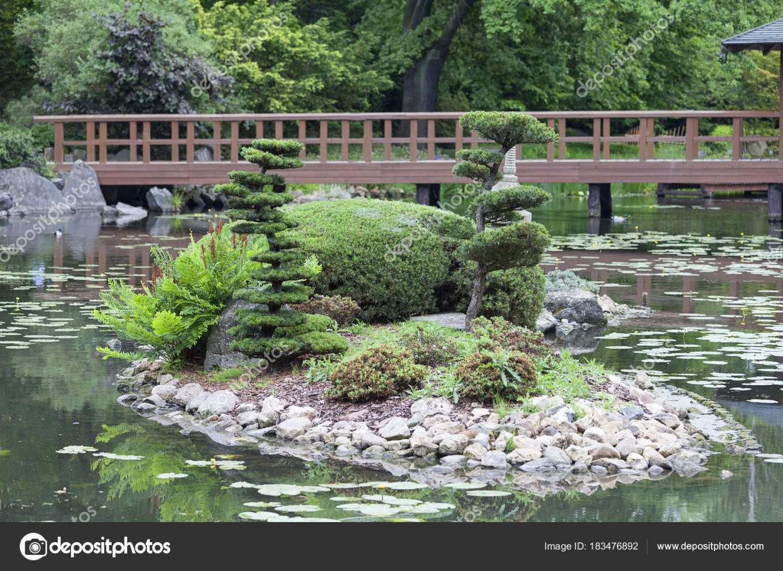 Japanischer Garten Exotischen Pflanzen Wroclaw Polen — Stockfoto von Pflanzen Im Japanischen Garten Bild