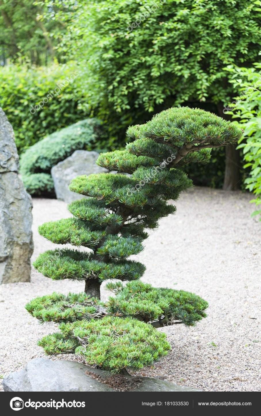 Japanischer Garten Im Sommer Exotische Pflanzen Wroclaw Polen von Pflanzen Im Japanischen Garten Bild