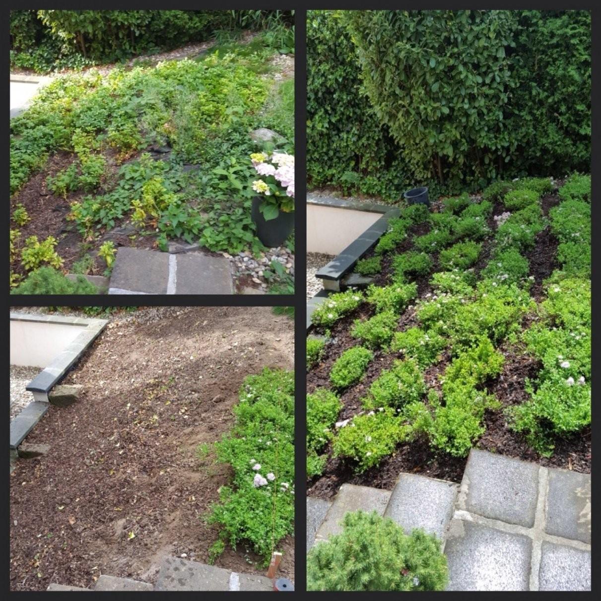 Luxus Zierkies Garten Bilder Greenoasisenvironmental Konzept Für von Steine Für Den Garten Bild