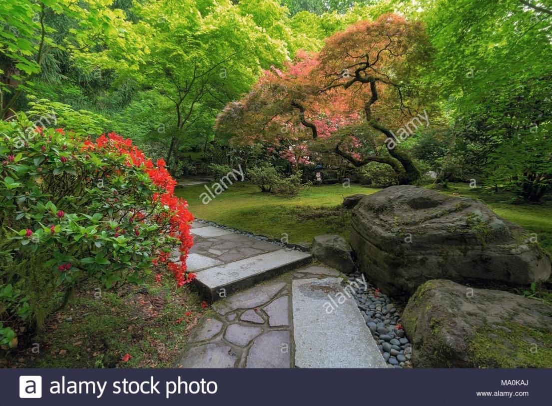 Stein Pfad Mit Steinen Ahorn Bäume Pflanzen Sträucher Im Japanischen von Pflanzen Für Japanischen Garten Bild