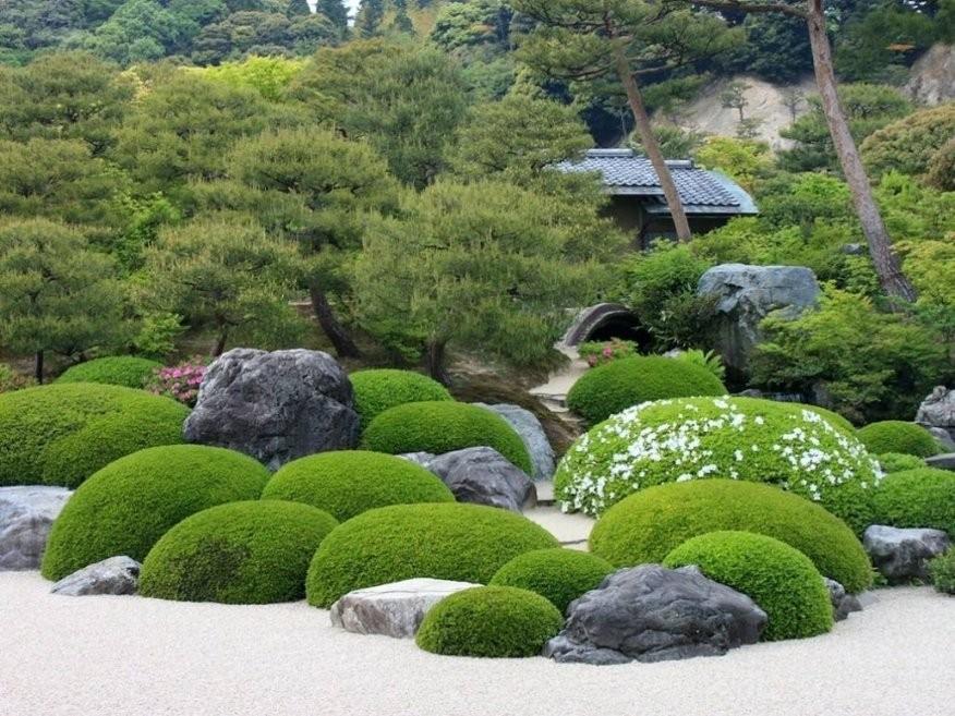 Verwunderlich Japanischer Garten Pflanzen Innenarchitektur Von von Pflanzen Im Japanischen Garten Bild