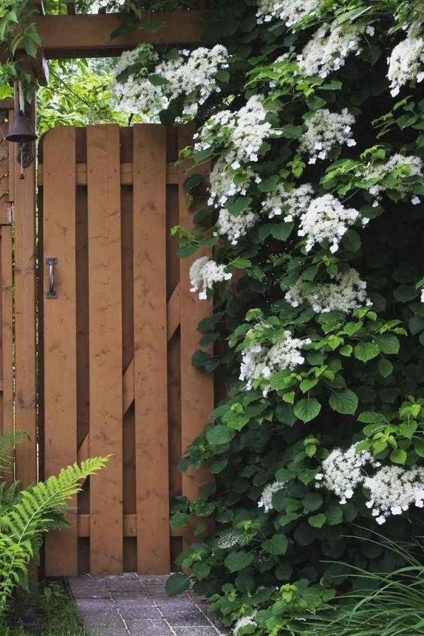 12 Tolle Vorschläge Für Schnellwachsende Kletterpflanze Im Garten von Schnell Wachsende Kletterpflanze Immergrün Photo