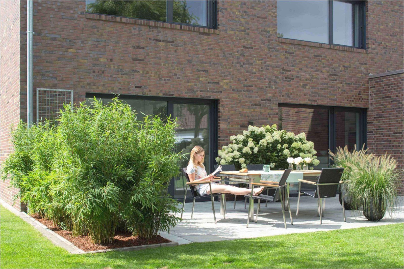 42 Neu Sichtschutz Pflanzen Terrasse Foto  Komplette Ideen von Pflanzen Als Sichtschutz Terrasse Bild