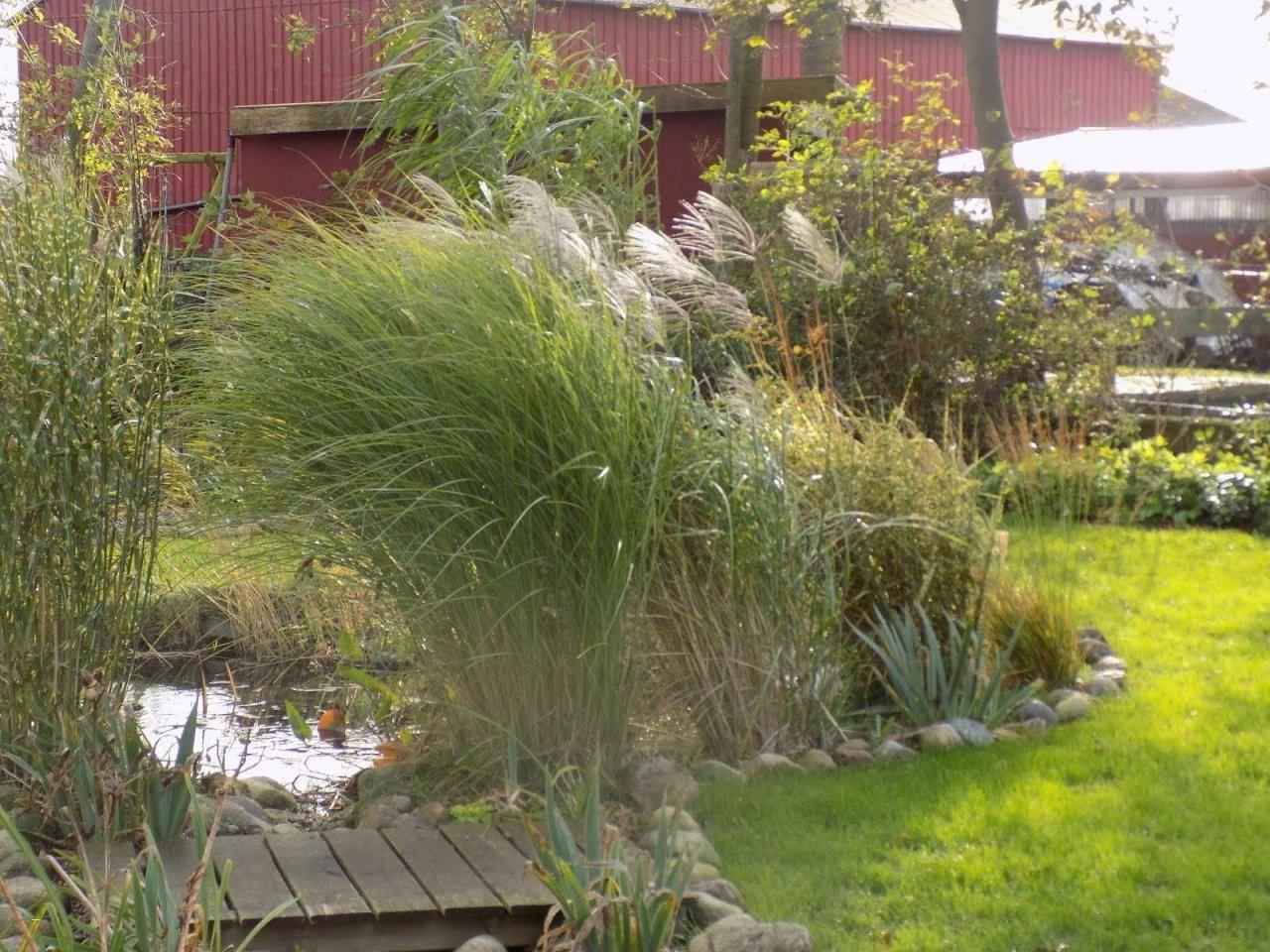 42 Schön Gräser Im Garten Als Sichtschutz Bild  Komplette Ideen von Gartengestaltung Mit Gräsern Und Kies Photo