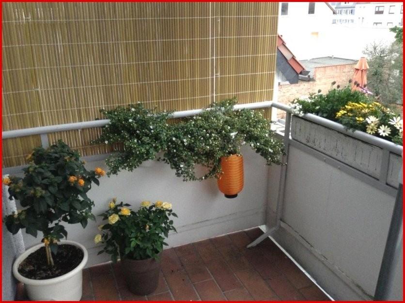 80 Images Balkon Sichtschutz Holz Selber Bauen Ideas von Sichtschutz Für Balkon Selber Machen Bild