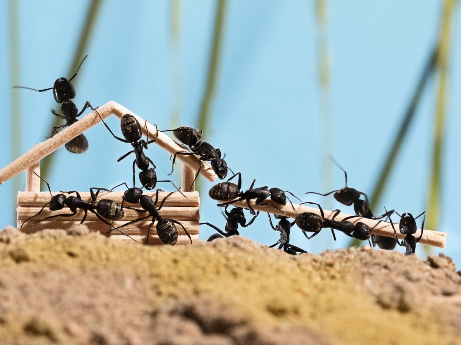 Ameisen Bekämpfen  Apel Schädlingsbekämpfung von Ameisen In Der Küche Photo