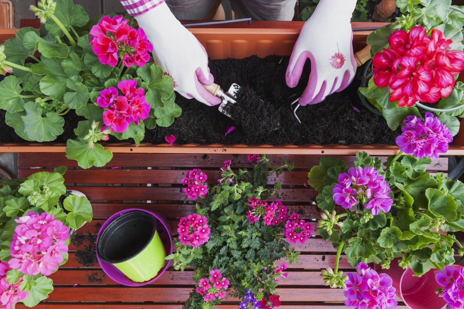 Balkonpflanzen Tipps Und Infos Zur Balkonbepflanzung von Balkonpflanzen Für Pralle Sonne Photo