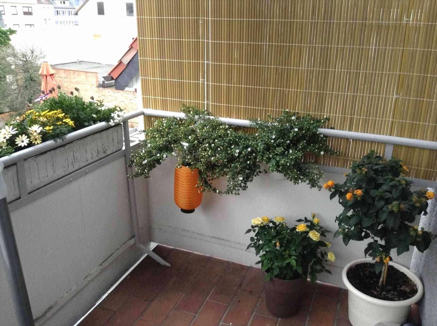 Balkonverglasung Selber Machen Produktfotos Das Stilvoll So Gut Wie von Sichtschutz Für Balkon Selber Machen Bild