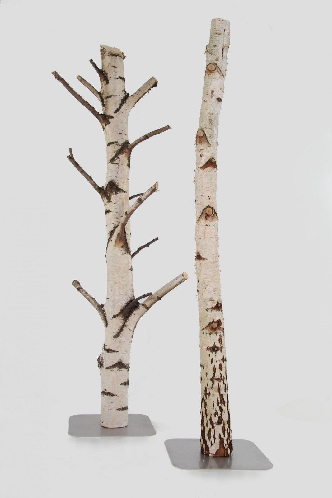 Baumstammstücke Kaufen  Zweigedeko von Birkenstamm Mit Ästen Kaufen Bild