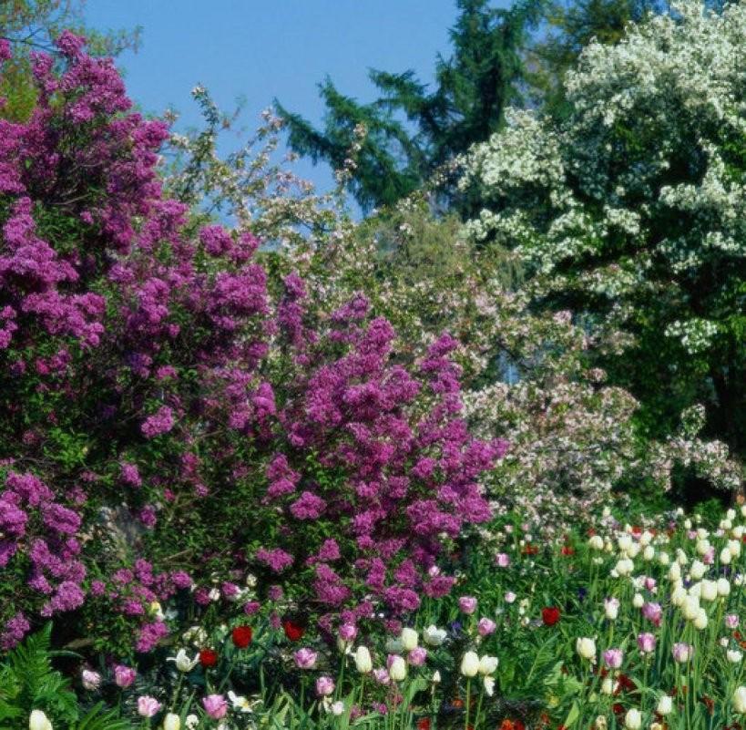 Baumtrends Was Jetzt Schnell In Den Garten Gehört  Welt von Schnell Wachsende Bäume Für Kleine Gärten Bild