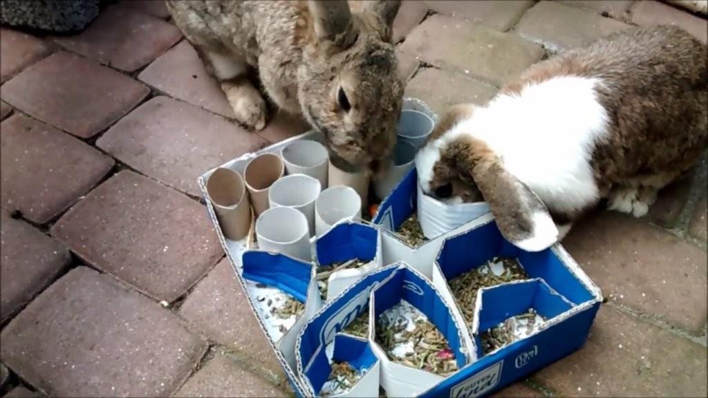 Beschäftigung Aus Kartons Für Kaninchen  Youtube von Kaninchen Spielplatz Selber Bauen Bild