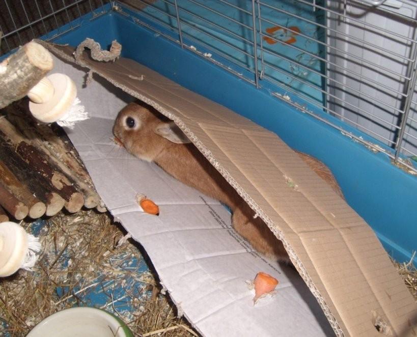 Beschäftigung Für Stallhasen von Kaninchen Spielplatz Selber Bauen Bild