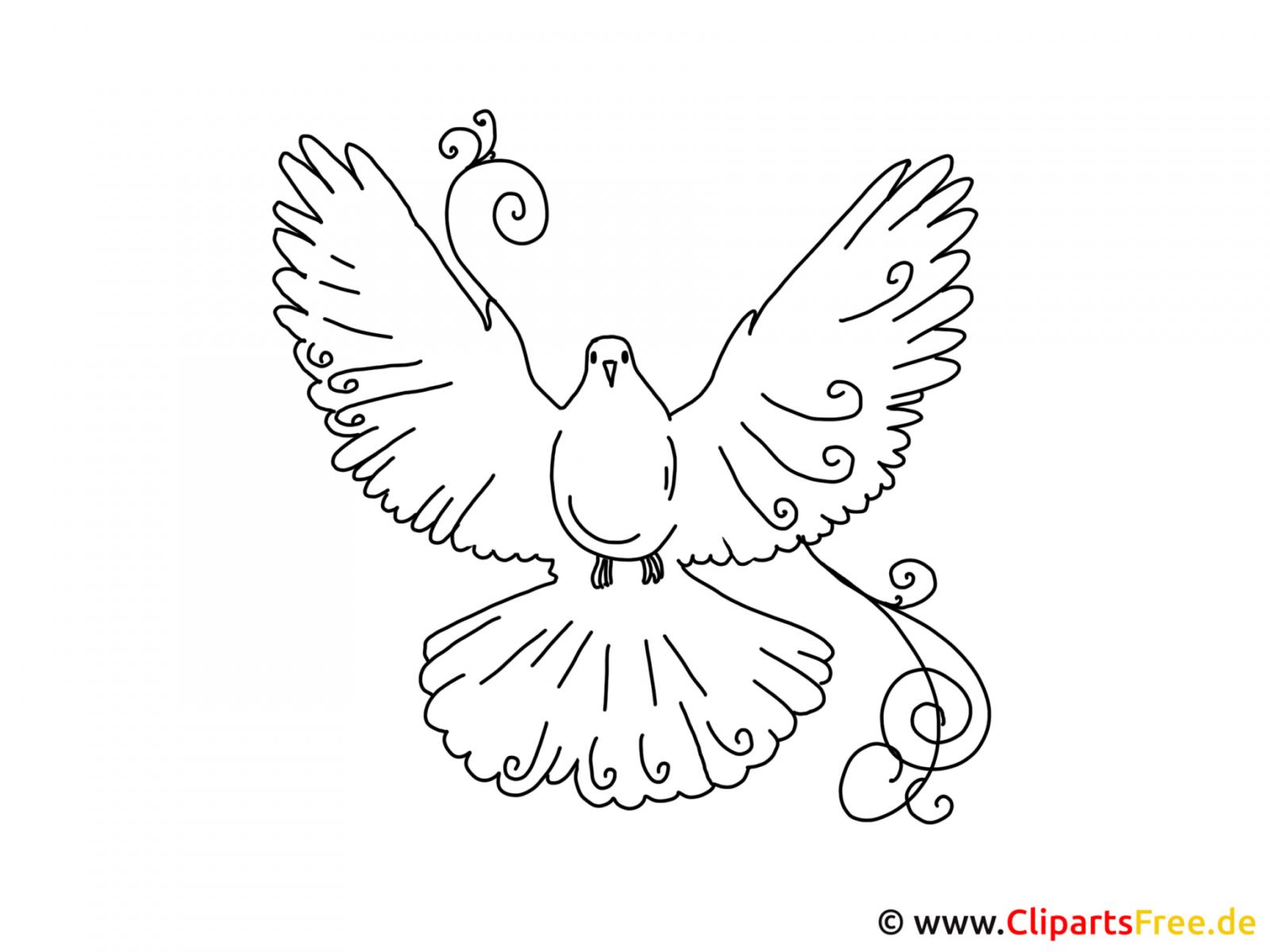 Bilder Selber Malen Vorlagen Vogel Taube von Bilder Selber Malen Vorlagen Photo