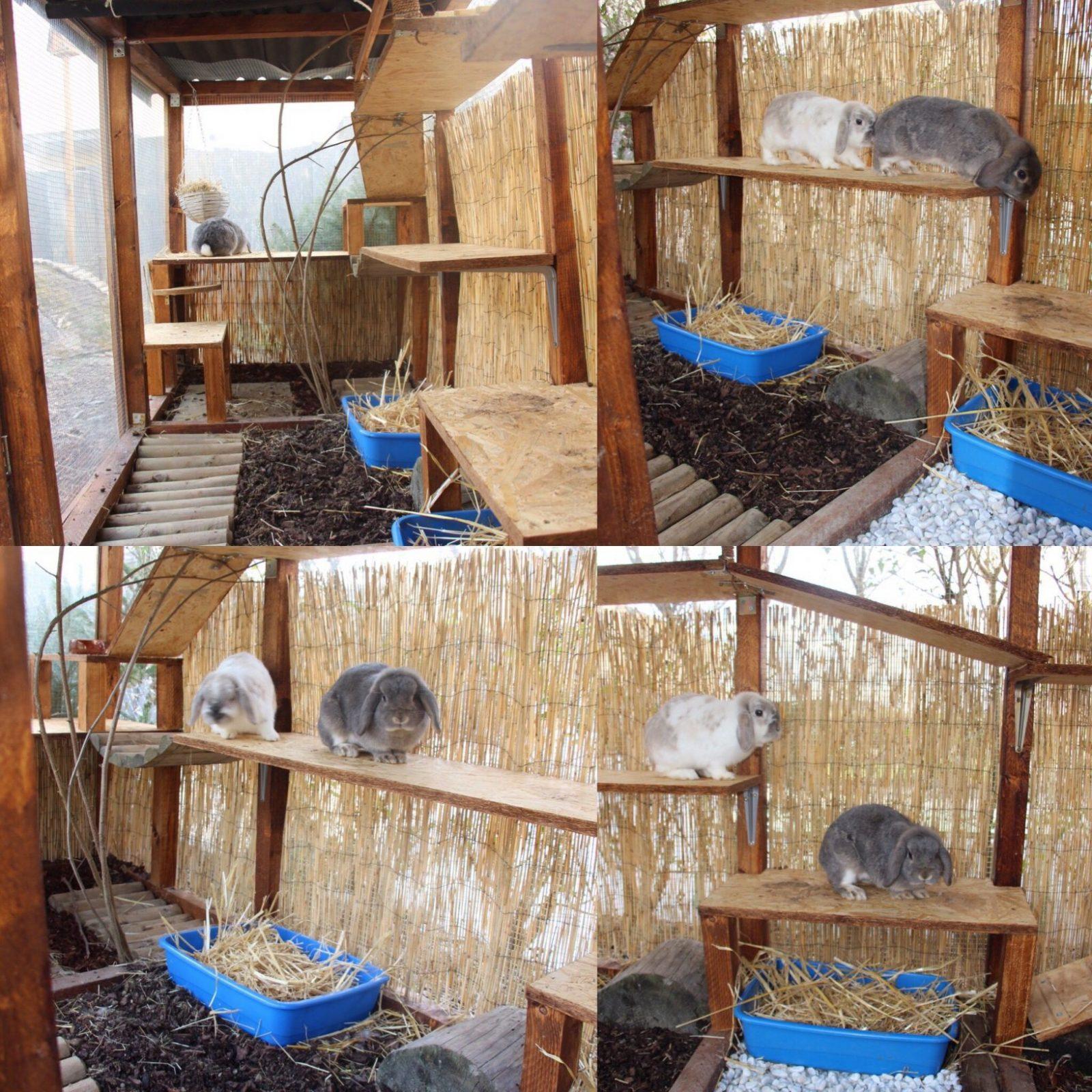 Bildergebnis Für Spielzeug Für Kaninchen Selber Bauen  Lilly von Kaninchen Spielplatz Selber Bauen Photo