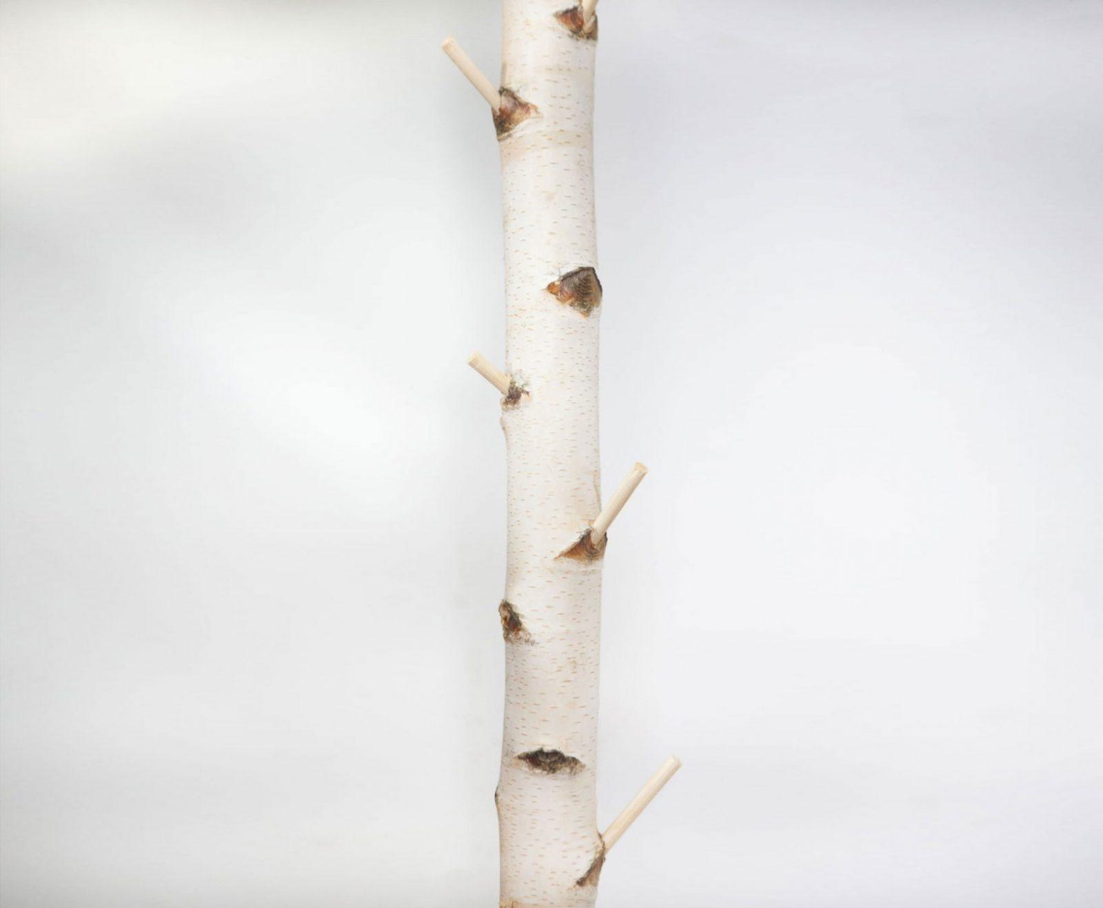 Birkenstamm Als Garderobe Für Ihre Moderne Inneneinrichtung von Birkenstamm Mit Ästen Kaufen Photo
