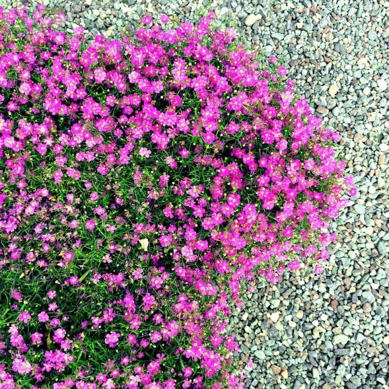 Blumenbeet Gestalten Mit Kies  So Legen Sie Ein Kiesbeet An von Blumenbeet Gestalten Mit Kies Photo