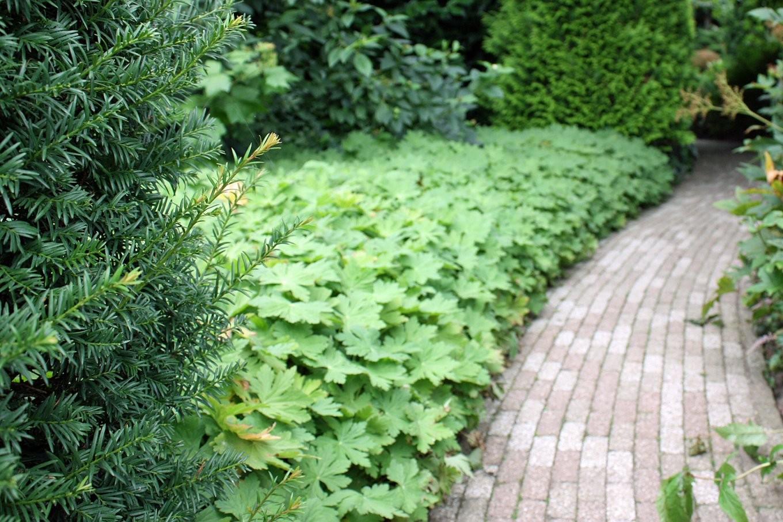 Bodendecker Für Die Verschiedensten Situationen  Pflanzen Nach von Stauden Sonniger Trockener Standort Photo
