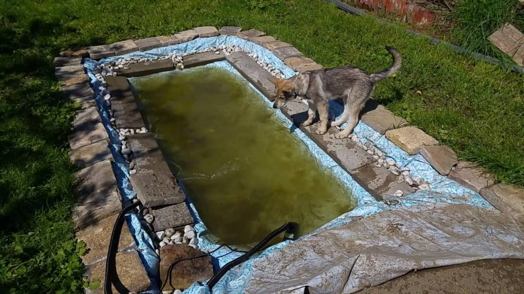 Chenoa Im Hundepool  Youtube von Hunde Pool Selber Bauen Photo