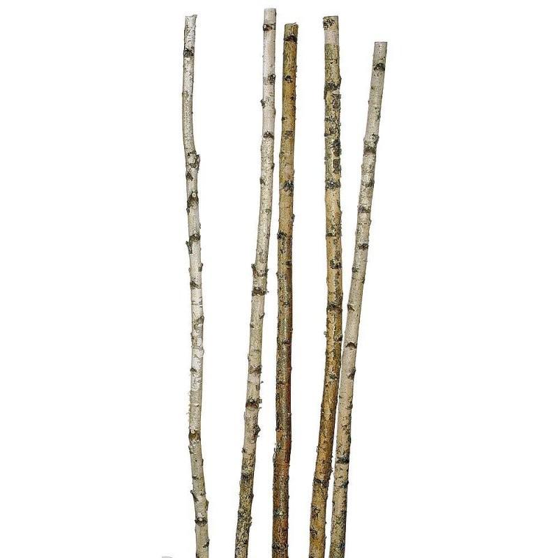 Dekobirkenstämme 170 Cm  Deko  Birkenstamm Kaufen Deko Birkenstamm von Birkenstamm Mit Ästen Kaufen Bild