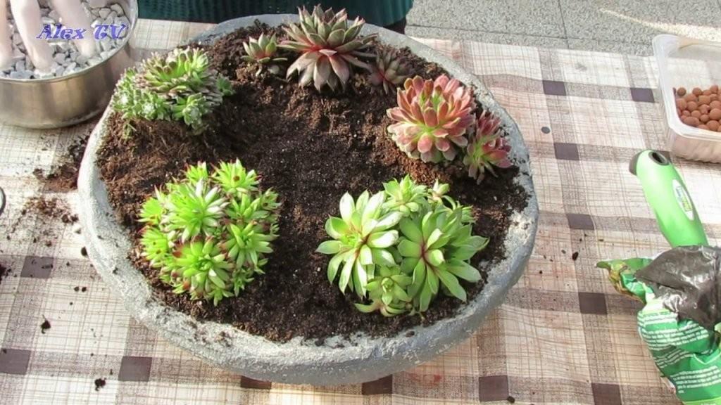 Dekoration Für Garten  Sukkulenten Hauswurz In Betonschale von Deko Ideen Mit Hauswurz Bild