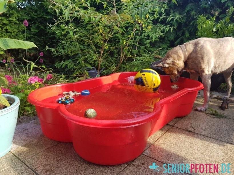 Der Hundepool  5 Pooltypen Im Hundealltagtest  Seniorpfoten von Hunde Pool Selber Bauen Photo