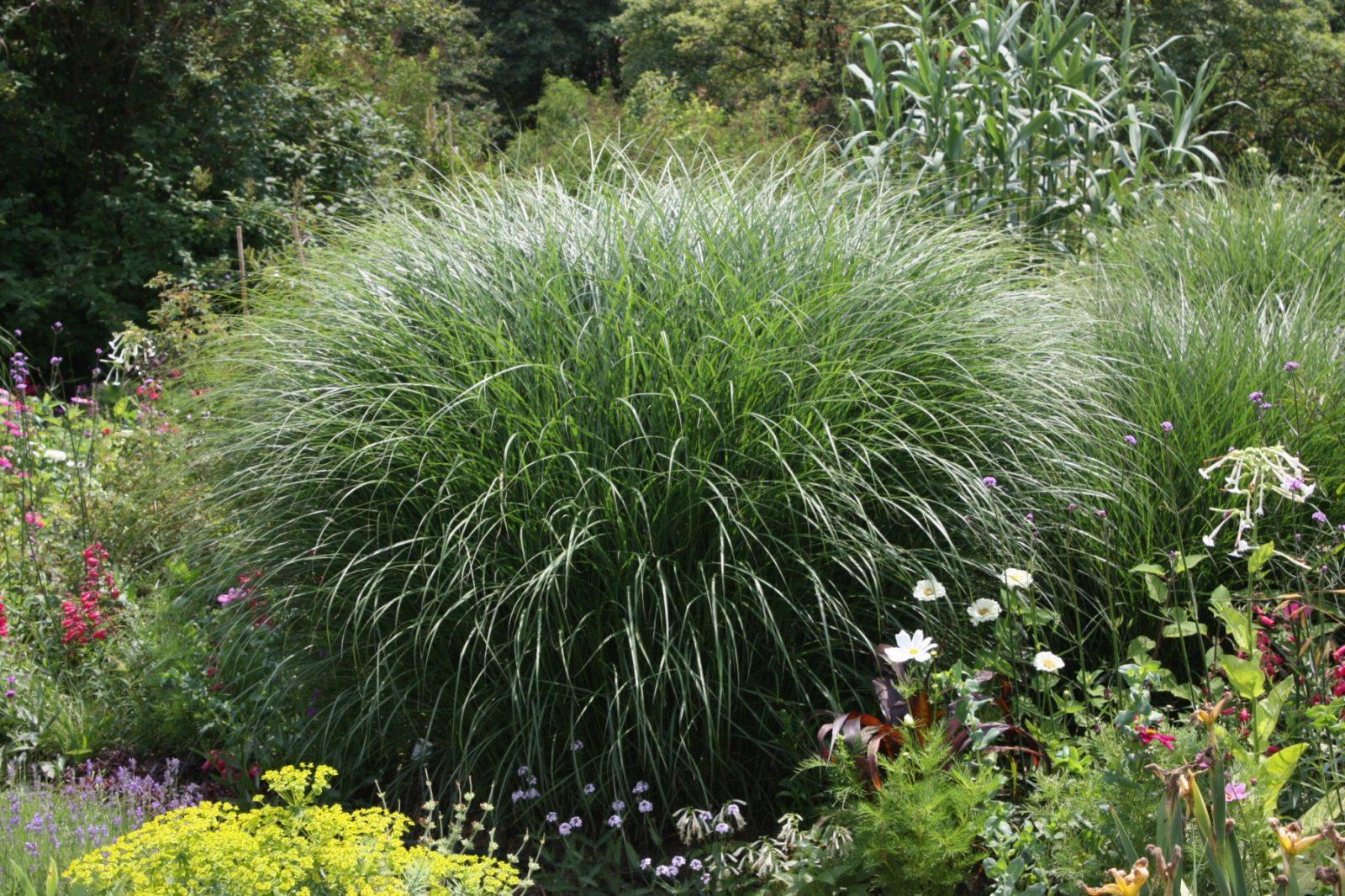 Der Richtige Standort Für Ziergräser Im Garten  Native Plants von Pflanzen Für Sonnige Trockene Standorte Bild