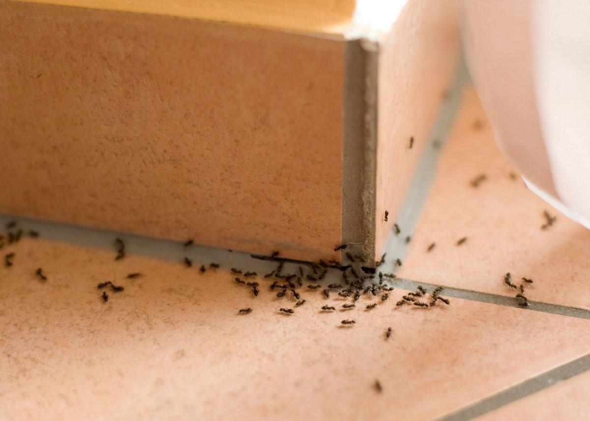 Die 7 Besten Tipps Gegen Ameisen Im Haus  Heimhelden von Ameisen In Der Küche Bild