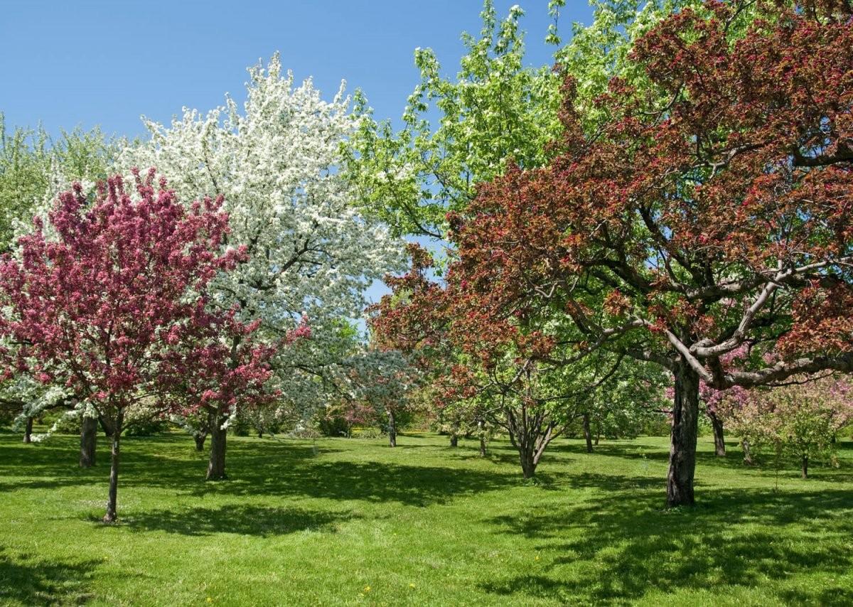 Die Schönsten Bäume Für Den Eigenen Garten  Heimhelden von Schnell Wachsende Bäume Für Kleine Gärten Bild