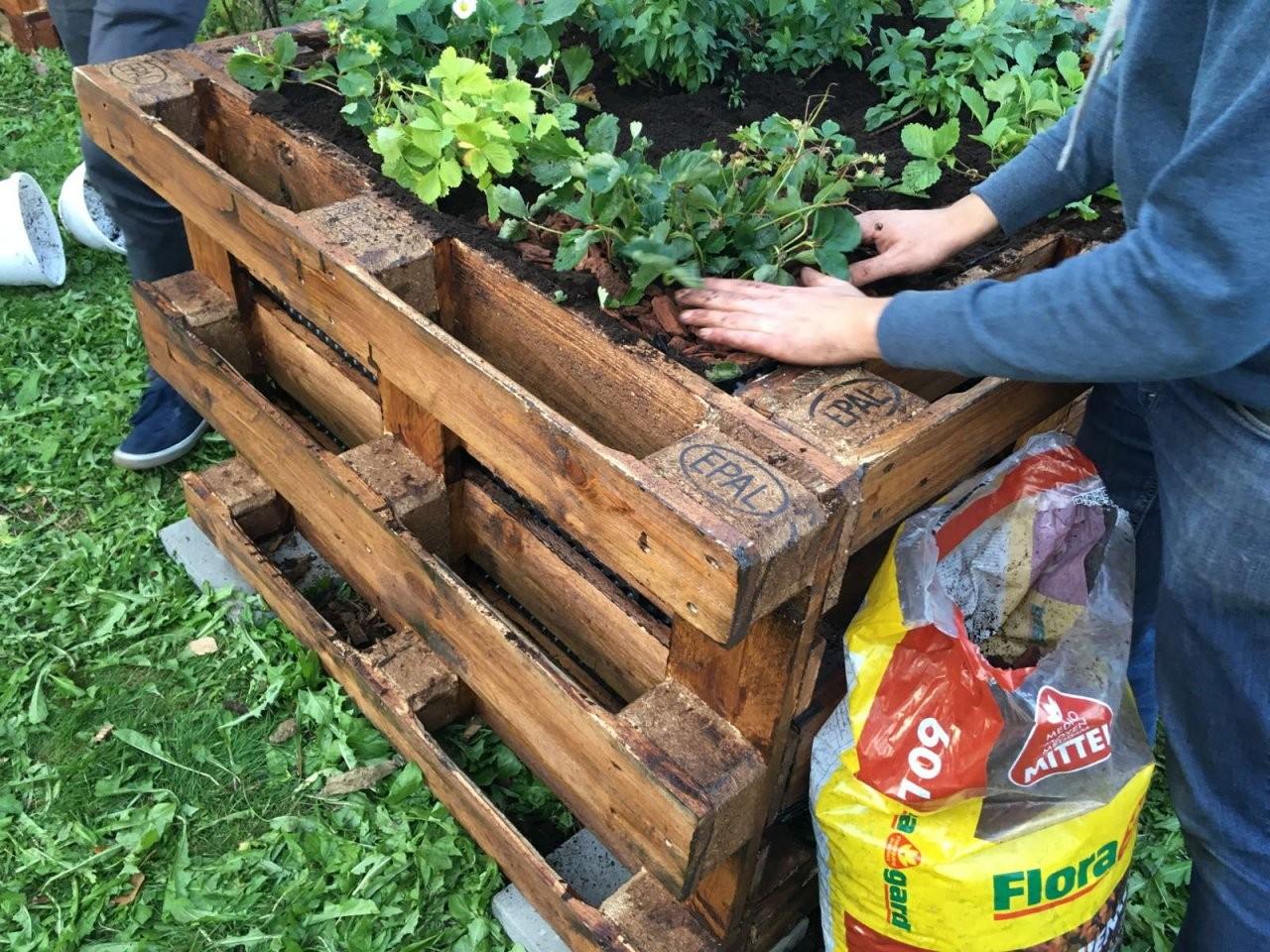 Die Top 10 Der Besten Pflanzen Für Ein Hochbeet  Plantura von Hochbeet Bepflanzen Erstes Jahr Photo