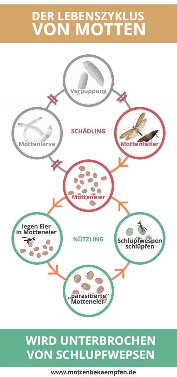 ᐅ Motten Bekämpfen In 3 Einfachen Schritten [Effektiv Und Nachhaltig] von Motten In Der Wohnung Woher Photo