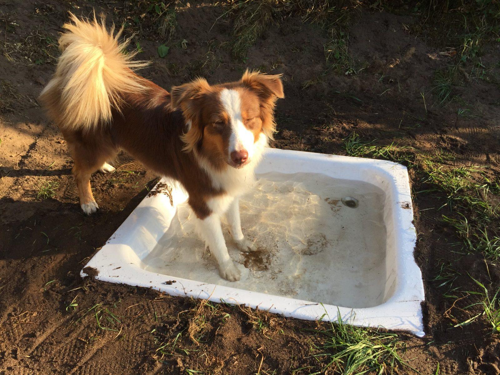 Ein Königreich Für Einen Hundepool  Diy Hundepool › Gartenspielzeug von Hunde Pool Selber Bauen Bild