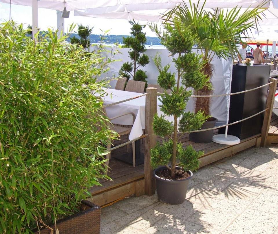 Gartenbambus Fargesia Rufa  Bambus Und Pflanzenshop von Pflanzen Als Sichtschutz Terrasse Photo