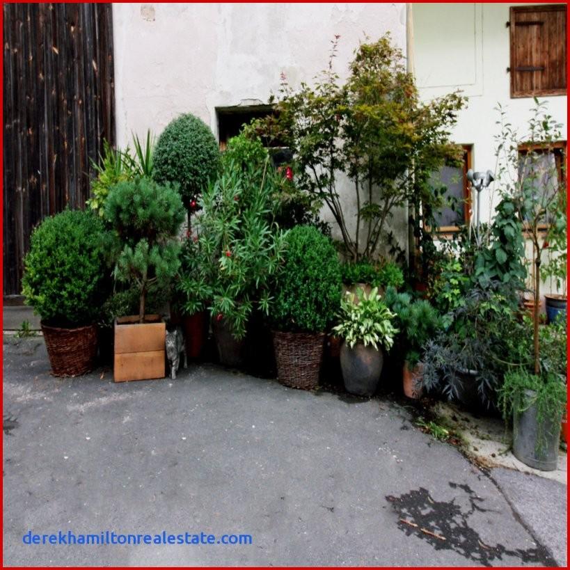 Gartengestaltung Mit Gräsern Und Kies – Wohn Design Konzept Von von Gartengestaltung Mit Gräsern Und Kies Photo