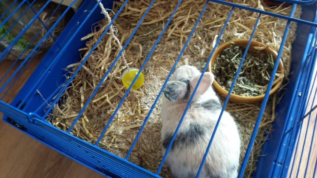 Hasen Spielzeug Selber  Leicht Machen🐇🐇🐇🐇🐇  Youtube von Kaninchen Spielplatz Selber Bauen Photo