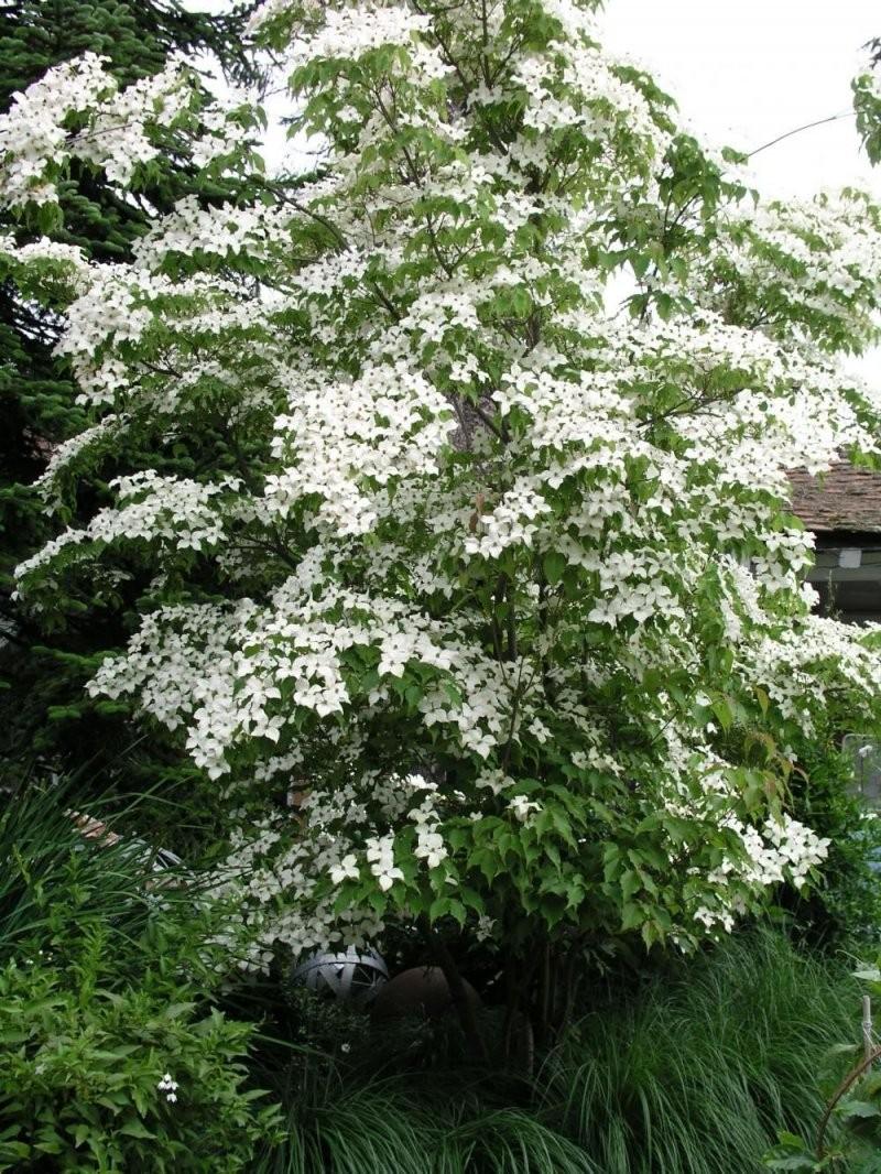 Hausbäume Für Kleine Gärten  Gartenzaun  Haus Bäume Bäume Garten von Schnell Wachsende Bäume Für Kleine Gärten Bild