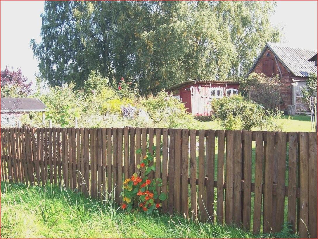 Hecke Als Sichtschutz 50M Nötig Hausgarten Von Efeu A23R Design Zum von Efeu Sichtschutz Selber Machen Bild