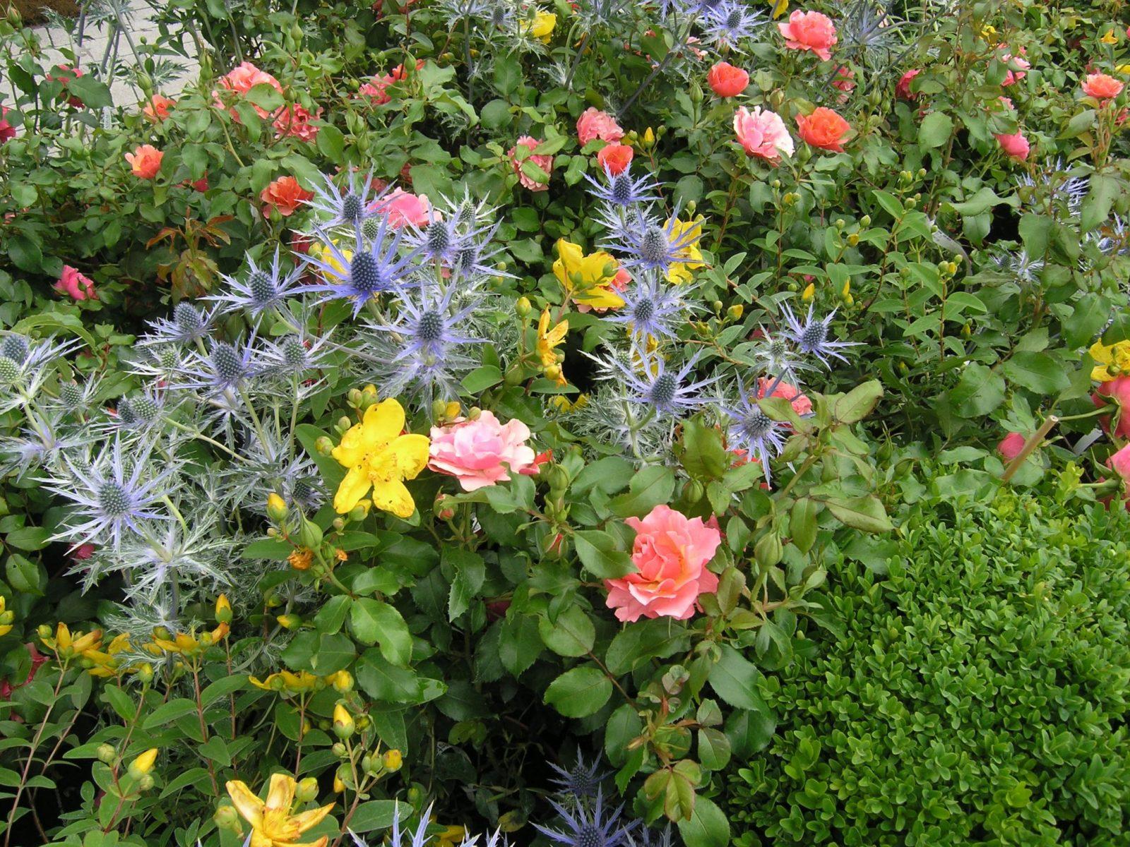 Hecken  Die Besten Ideen Für Eine Schöne Hecke Im Garten von Schmale Hecke Als Sichtschutz Bild