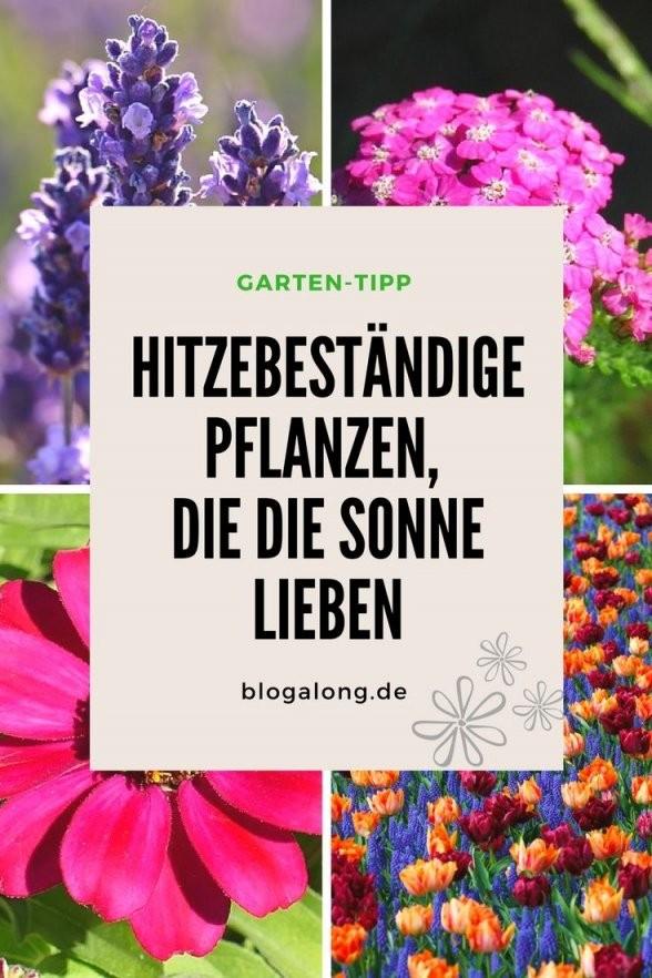 Hitzebeständige Pflanzen Die Die Sonne Lieben  Planzen  Garten von Balkonpflanzen Für Pralle Sonne Photo
