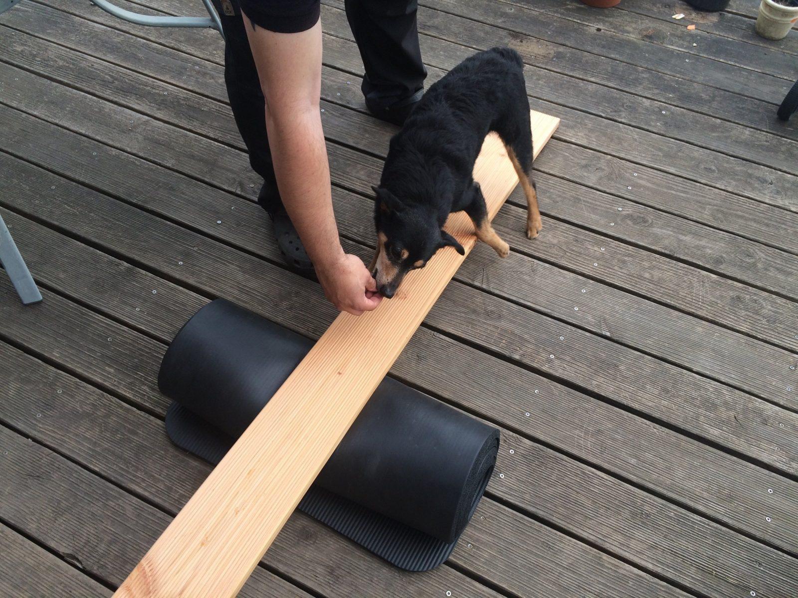 Hundebeschäftigung Tag 15  Die Wippe von Hunde Wippe Selber Bauen Photo
