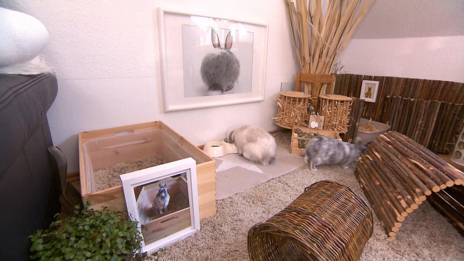 Hundkatzemaus Diana Eichhorn Bekommt Tipps Und Tricks Für Die von Kaninchen Spielplatz Selber Bauen Bild